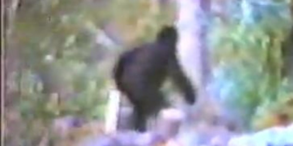 Seattle Bigfoot Video