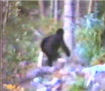 Seattle Bigfoot Video