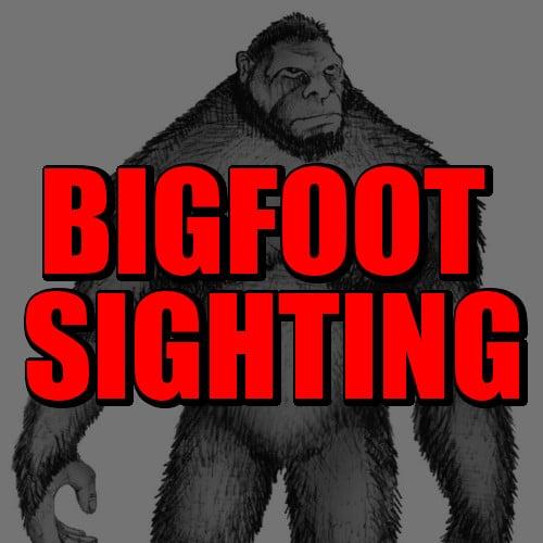 Real Bigfoot Sighting