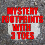 Mystery of the three toed footprints