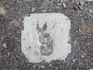 three toed footprint