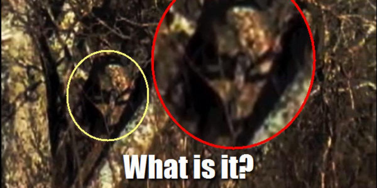 Photo of a grey alien in Texas