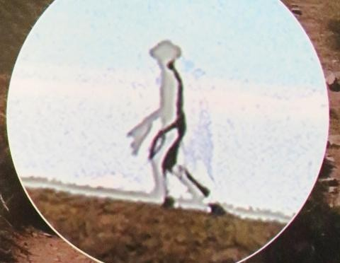 enlarged photo of Taiwanese transparent alien