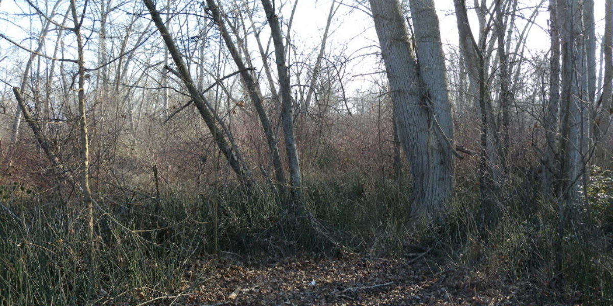 Are Bigfoot hiding in the swamps of the Umatilla Indian Reservation?