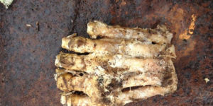 Is this the decomposed foot of a Bigfoot?