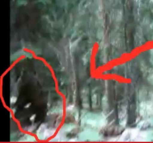 Slovenian Bigfoot