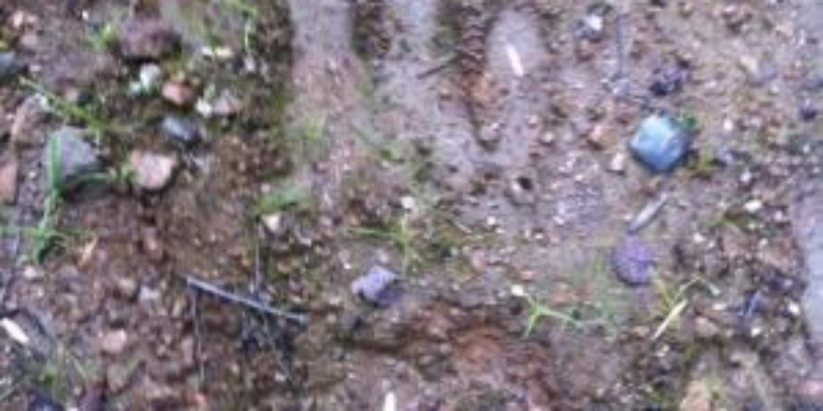 New Hampshire cryptid footprint