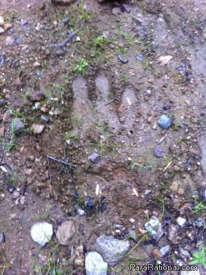 New Hampshire cryptid footprint