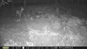 trail cam humanoid 2