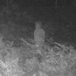 ghostly humanoid photo caught by a trail cam