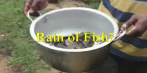 fish rain in India