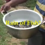 Fish Rain In Shrilanka
