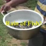 Fish Rain In Shrilanka