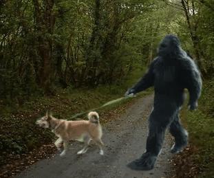 Does Bigfoot befriend dogs?
