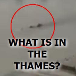 Sea Monster in the Thames River???