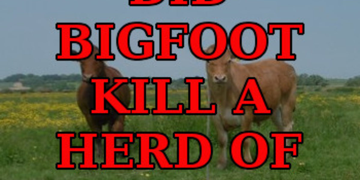 Did Bigfoot kill a herd of cattle?
