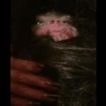 Mini Bigfoot Found in Azerbaijan