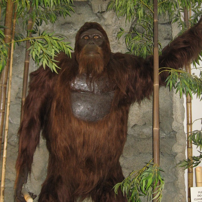Is Bigfoot a giant ape?