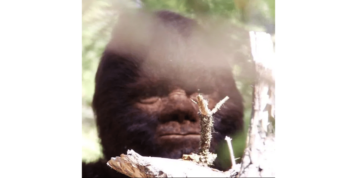 Review of Discovering Bigfoot