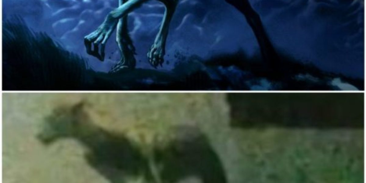 proof that the creature in Argentine was a hoax