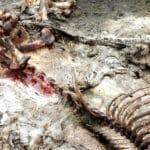 finding a bigfoot carcass
