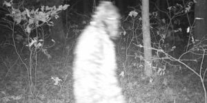 Macatawa Bigfoot photo