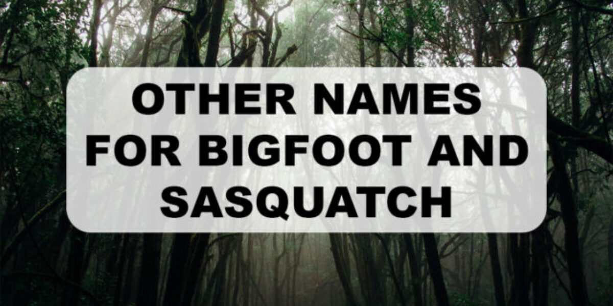 other names for Bigfoot cover